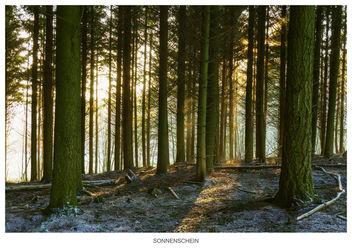 Sunshine - image gratuit #296285