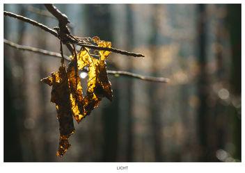 Bright Spot - image gratuit #296365