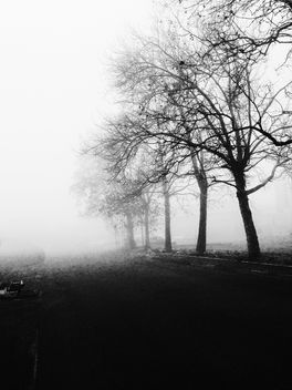 Trees against the fog - image gratuit #296495