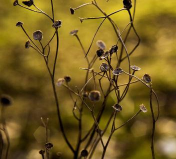 Nature - image gratuit #296655