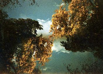 Kew Gardens - image #296885 gratis