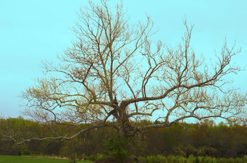 A Tree - Kostenloses image #297285