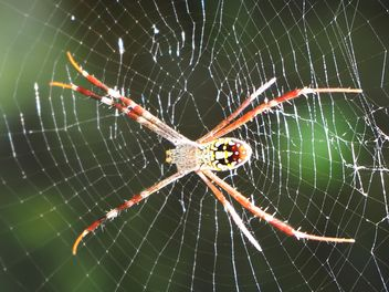 Spider on a net - image gratuit #297585