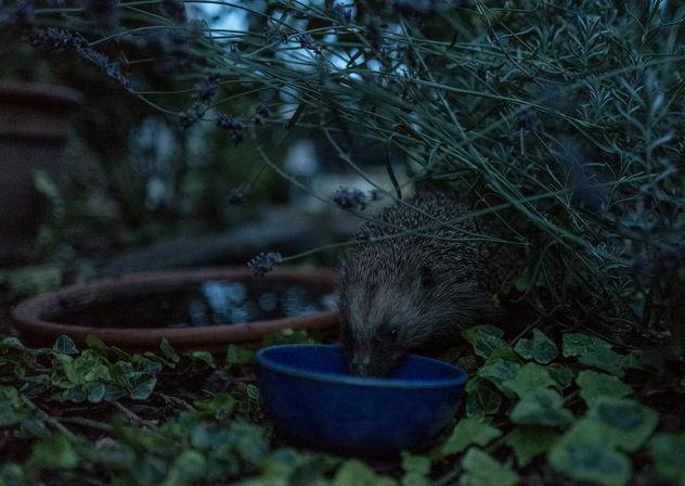 Night Visitor - Free image #298065