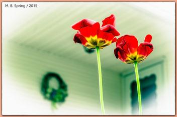 (257/365) Spring Flowers / Pentax K-x, Meriden, CT 2015 - image #298495 gratis