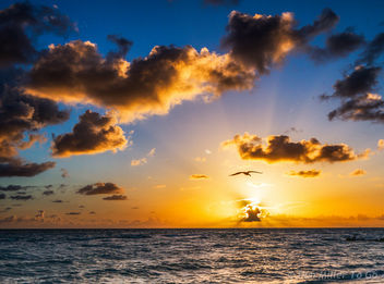 My Florida - image gratuit #299345