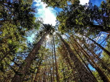 Cibola National Forest - In Explore July 2015 - Free image #299475