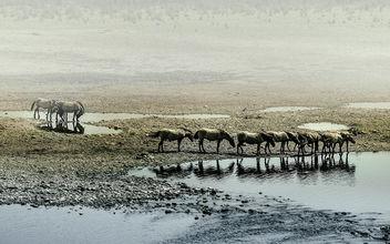 wild horses - Free image #299725