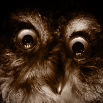 Scary Owl - Manchester Museum - Free image #299875
