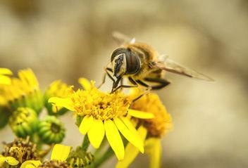 Nectar of summer - Free image #300625