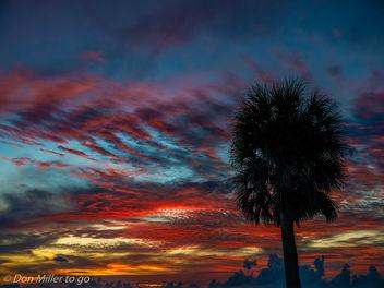 My Florida - Free image #300985
