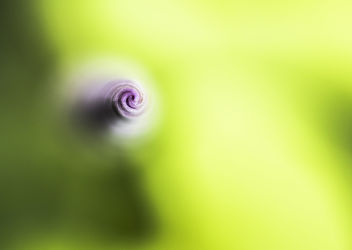 Un tourbillon de couleur - Free image #301065