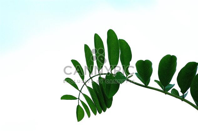 Brunch of green leafs - Free image #301385