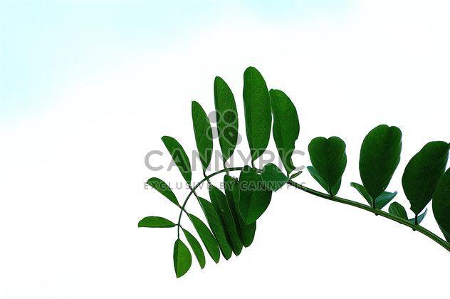 Бранч зеленых листьев - бесплатный image #301385