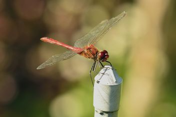 Dragonfly with beautifull wings - бесплатный image #301645
