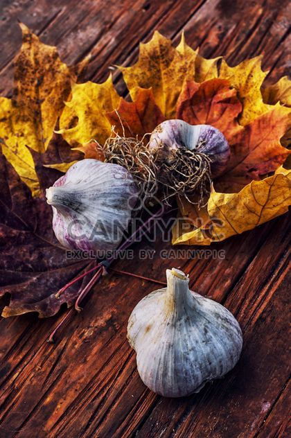 Garlic and yellow leaves - Free image #302035