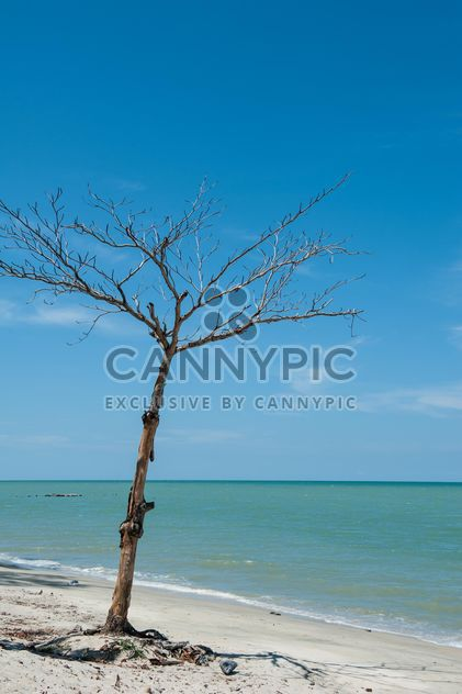 toter Baum am Strand - Kostenloses image #303345
