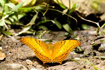 Orange butterfly on ground - image #303765 gratis