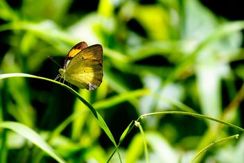 Butterfly on green grass - image #303775 gratis