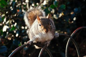 Squirrel - image gratuit(e) #303795