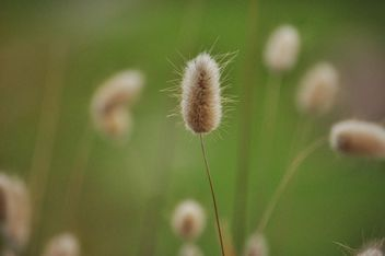 withered grass in focus sunlight - image #303995 gratis