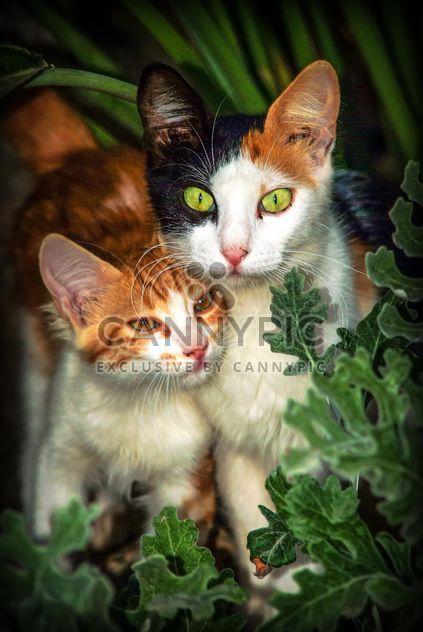 Zwei Kätzchen-Porträts - Kostenloses image #304055