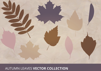 Autumn Leaves Vector Collection - Free vector #305465