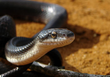 Sunlit Snake - Kostenloses image #306005