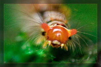 Cute Caterpillar - image gratuit #306165