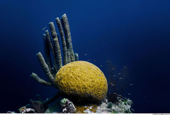 Ocean Brain - Free image #306245