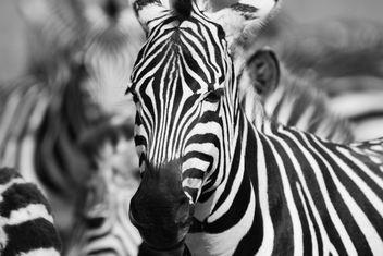 Black & White - Free image #306275