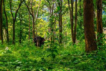 Elephant - Free image #306535