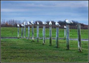 Pole Dancers - Free image #306685