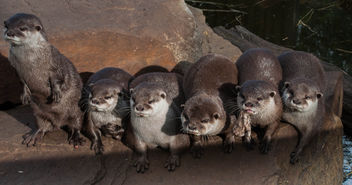 Otterly cute - Free image #306805