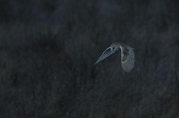 Barn Owl - 10 - image #307135 gratis