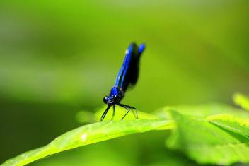 Deep Blue Dragon - Free image #307265