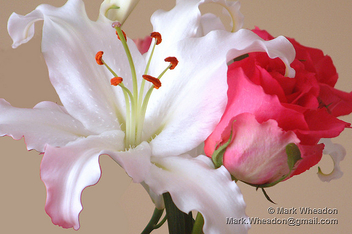 Lily and Rose - image gratuit #307555