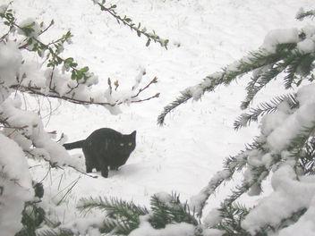 Snow Patrol - Free image #307755