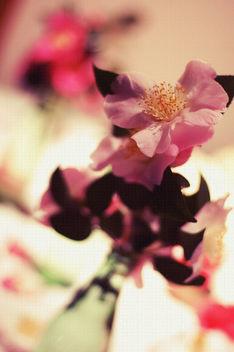 Descanso Gardens Camellia Show - Free image #312025