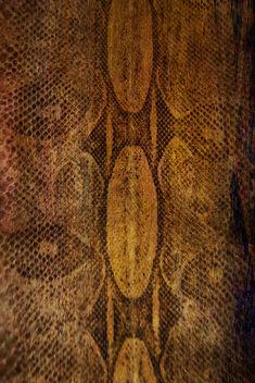 snake - Kostenloses image #312065