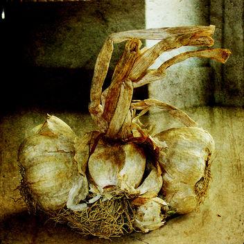 garlic - Free image #312115