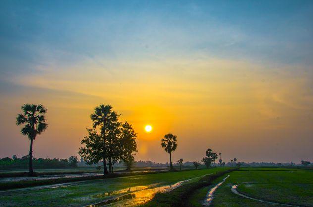 sunset on the cornfield - Free image #317425