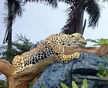 Leopard parks - image #318745 gratis