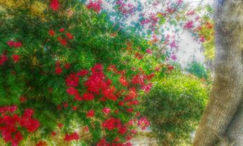 Floral Display - Kostenloses image #319345