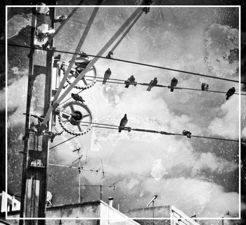 Pigeons wired discussion [B & W] - Free image #322245