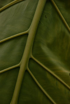 A leaf - image #323045 gratis