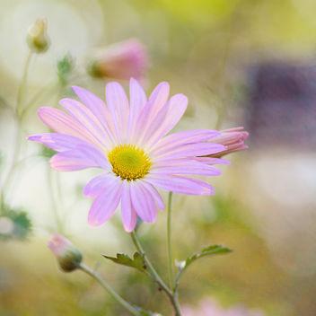 Sunny Dream. - image #323115 gratis