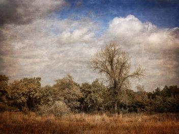 Texas - Kostenloses image #323905