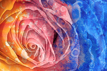 Acrylic Rose Macro - Hybrid HDR - Free image #323935