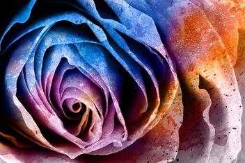 Acrylic Rose Macro - Hybrid HDR - Free image #324025
